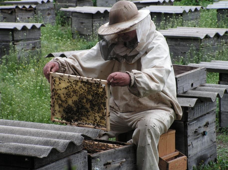 Как в августе сделать отводок пчел 7